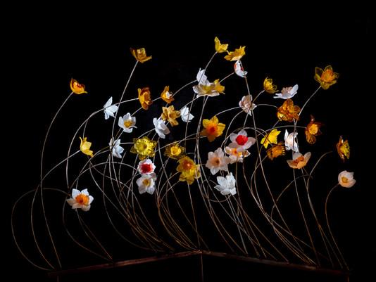 New Daffodills.jpg