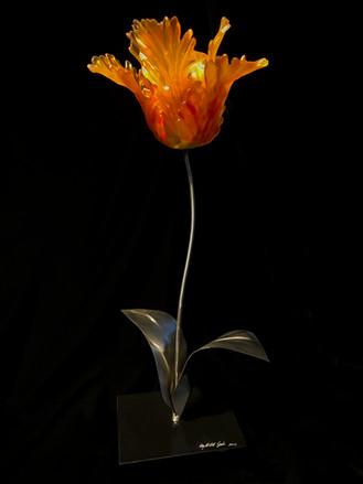 Gold Rembrandt Tulip