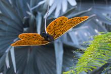 Butterflies of Nebraska