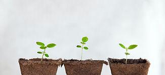 Replanting%252520small%252520plants_edited_edited_edited.jpg