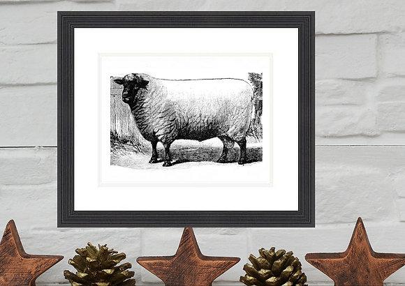 Sheep Print Framed