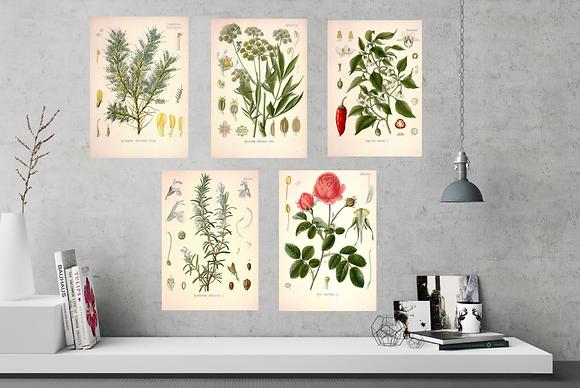 6  x Botanical Print Set C NO FRAME