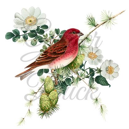 BOTANICAL GREETING CARD pretty bird