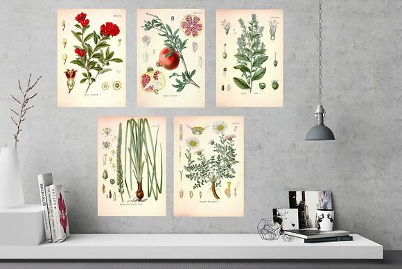 6 x Botanical Prints Set A  NO FRAME