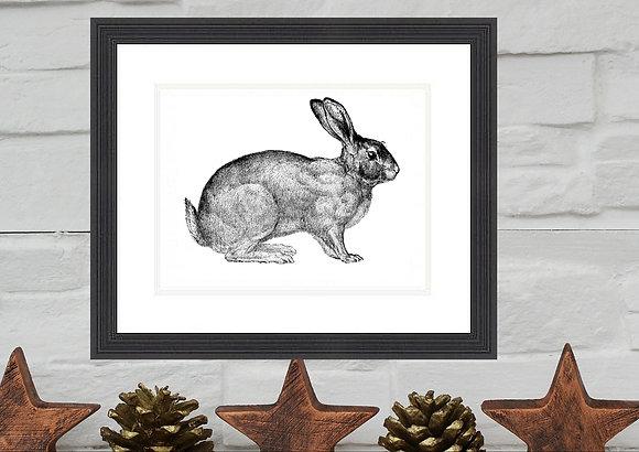 Rabbit Print Framed