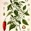 Thumbnail: 6  x Botanical Print Set C NO FRAME