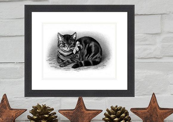Cat Print Framed