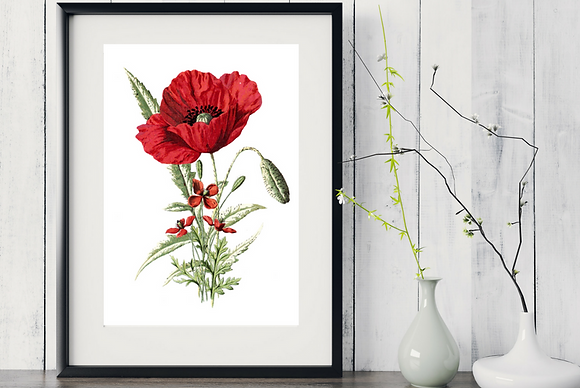 6 x Botanical Prints Poppies WITH FRAME