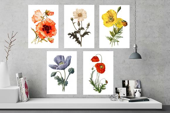 6 x Botanical Prints Poppies NO FRAME