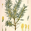 Thumbnail: Botanical Print Set C - 6 A4 Prints