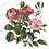 Thumbnail: DELICATE PINK ROSES ON WHITE BACKGROUND