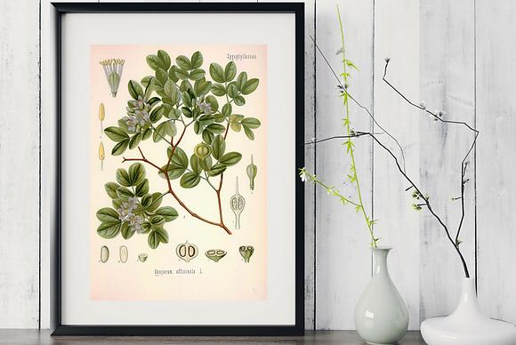 6  x Botanical Print Set C WITH FRAME