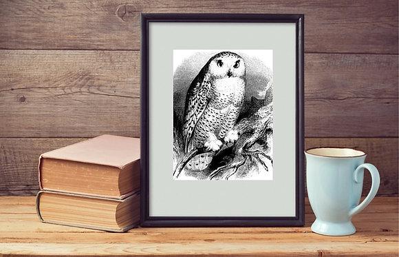 Owl Print Framed