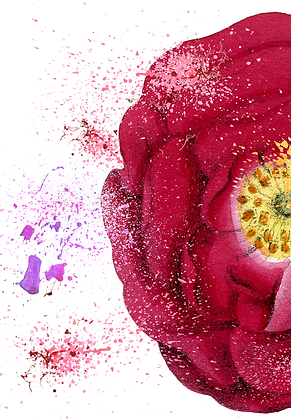 Red Rose A3 framed print