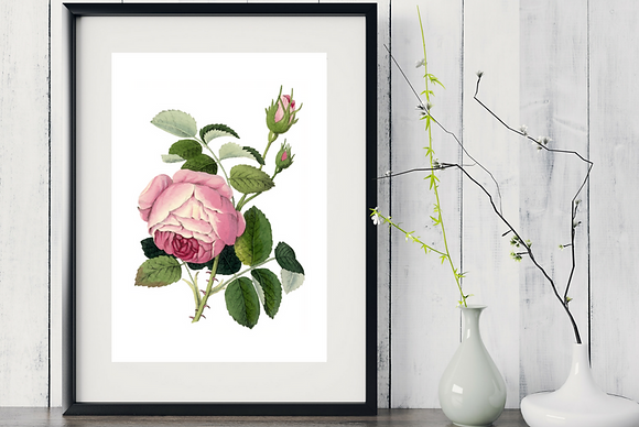 6 x Botanical Print Set Roses WITH FRAME