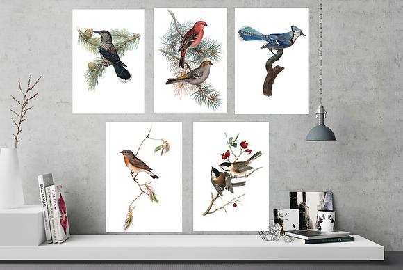 Set of 6 Beautiful Bird Images - 6 x A4 Prints