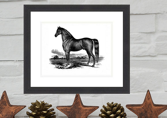 Black Horse Print