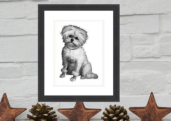 Maltese Terrier Print Framed