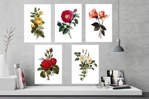 Botanical Print Set-Roses - 6 x A4 Prints