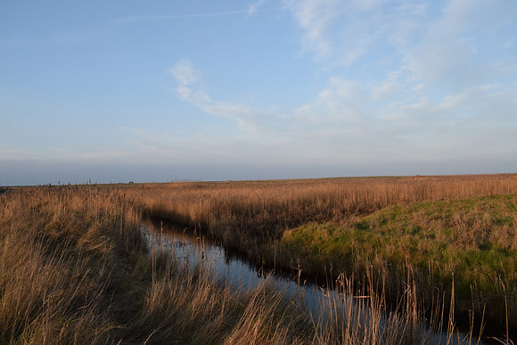CLEY REED BEDS
