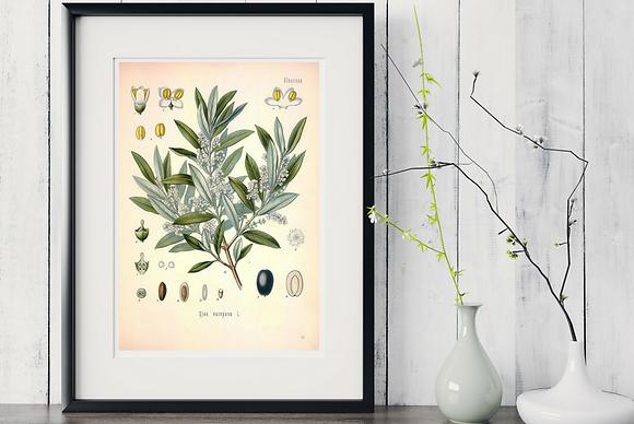 6 x Botanical Prints Set A WITH FRAME