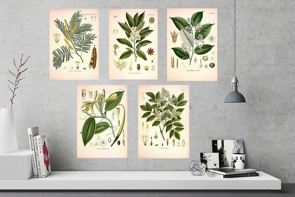 Botanical Print Set B - 6 A4 Prints