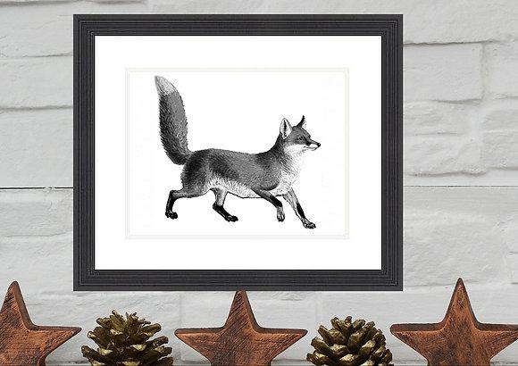 Fox Print Framed