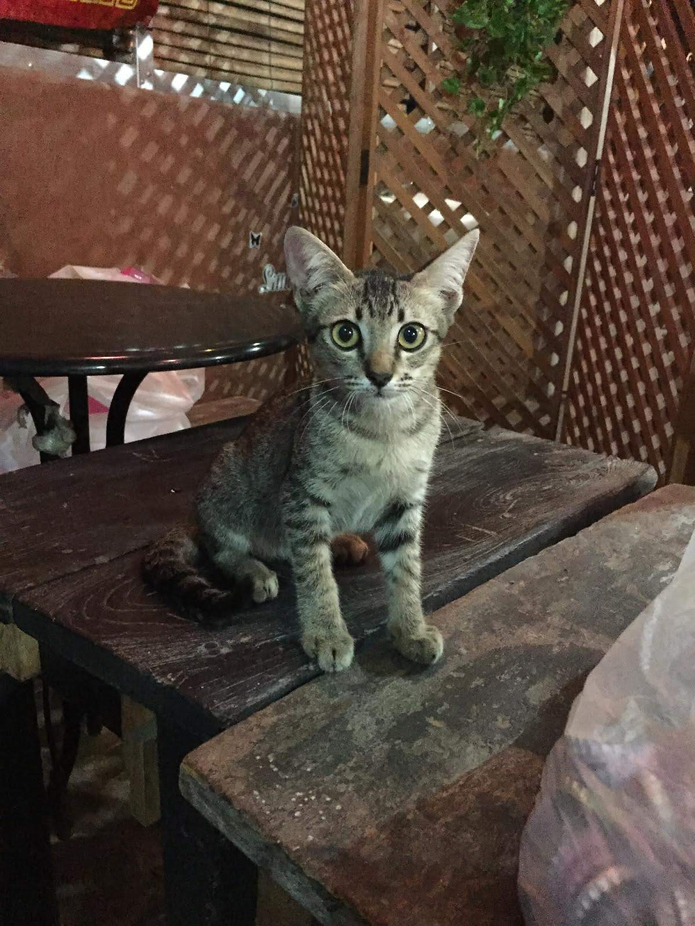 This cat would accompany me often when eating here