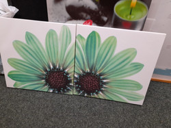 CANVAS SET £5 FOR THE PAIR