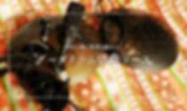 DSCN5673 のコピー3.jpg