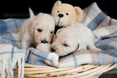 Puppies-41.jpg