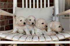 PuppiesSmall