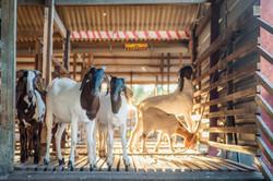 Sinar Eco Resort Animal Encounter