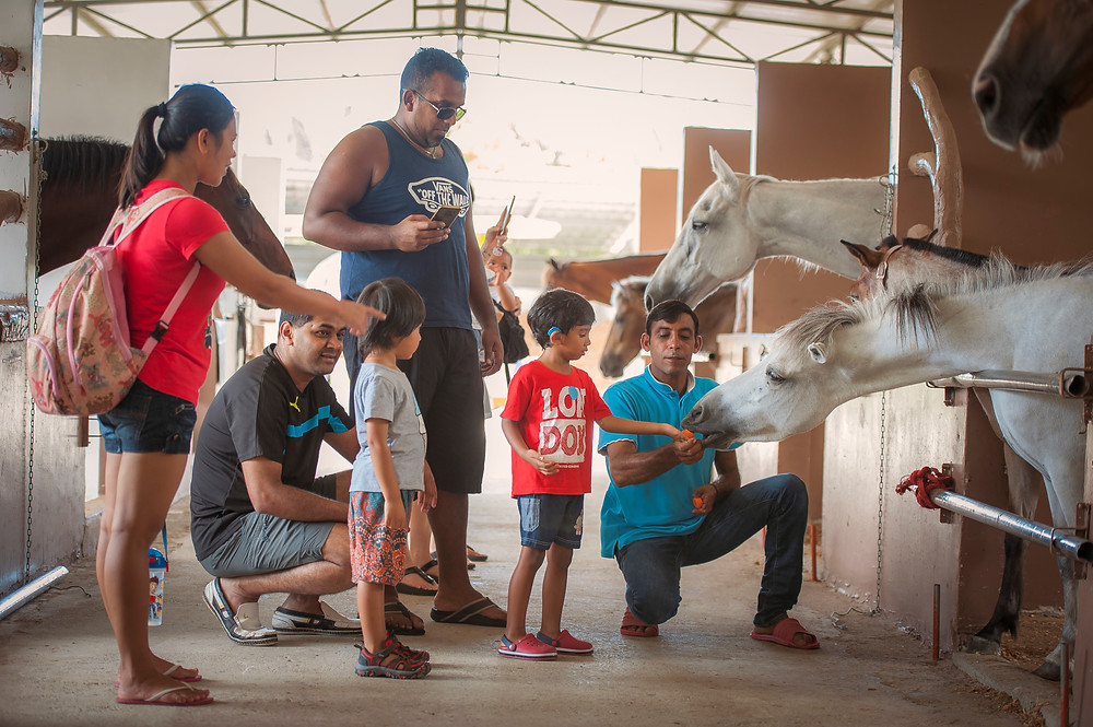 Guests feeding horses