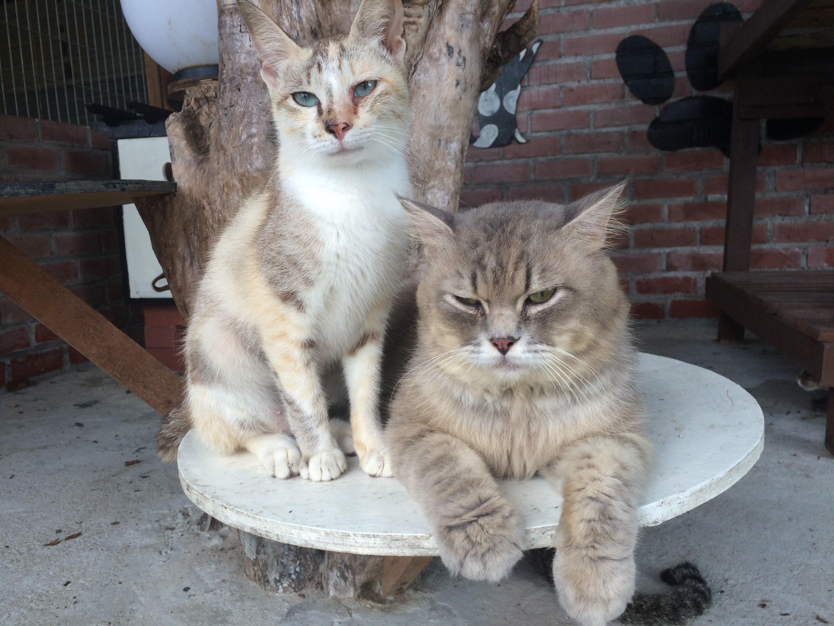 Animal Encounter - cat