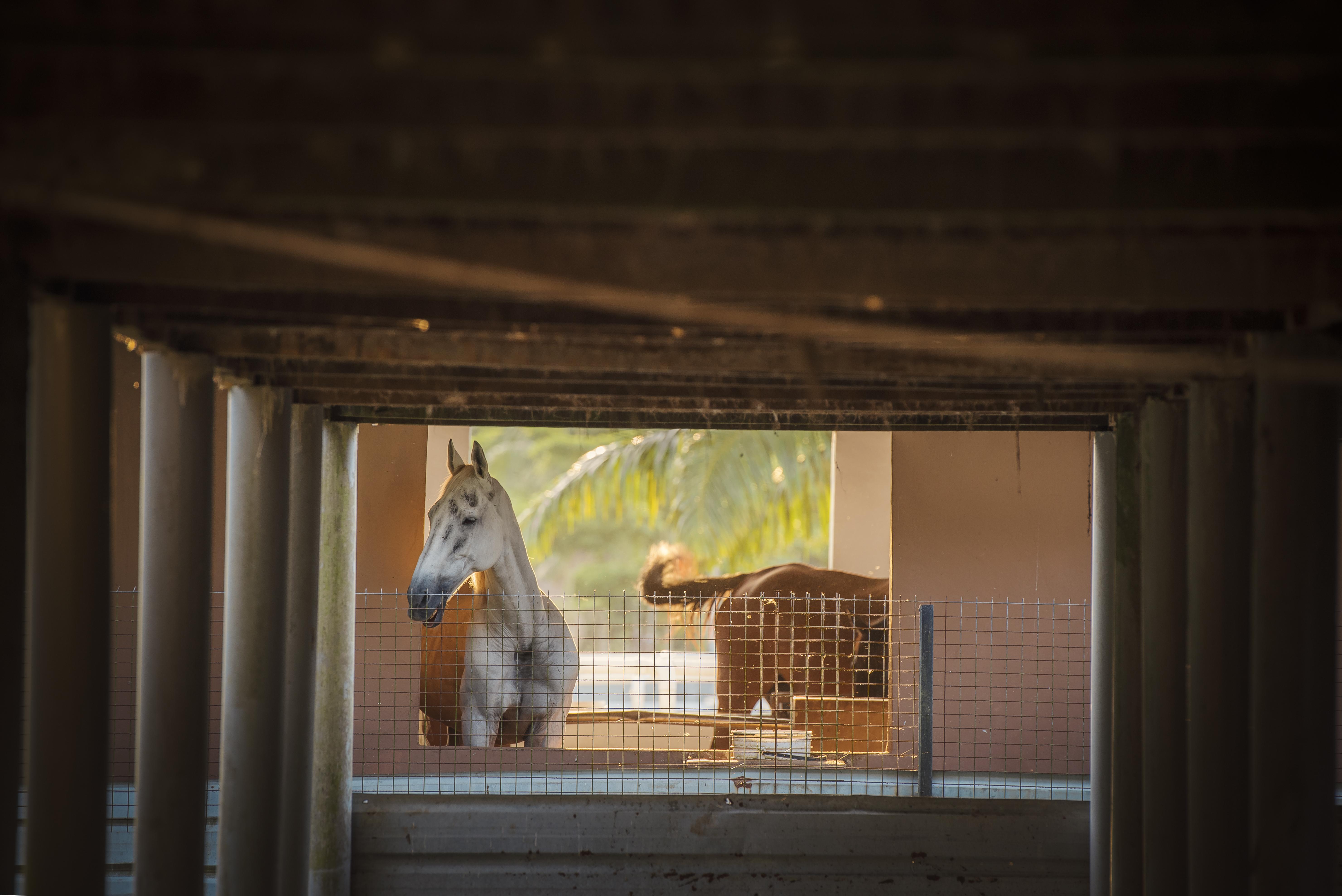 Animal Encounter - horse