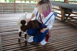 Animal Encounter - goat