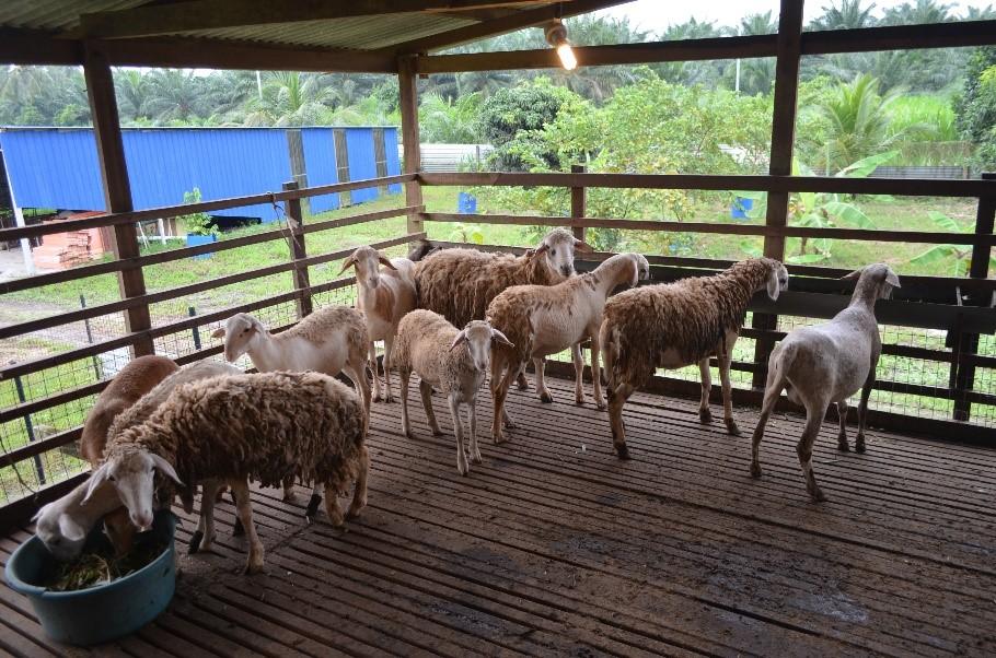 Animal Encounter - lamb
