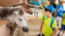Sinar Eco Resort Farm