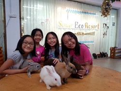 Animal Encounter - rabbit