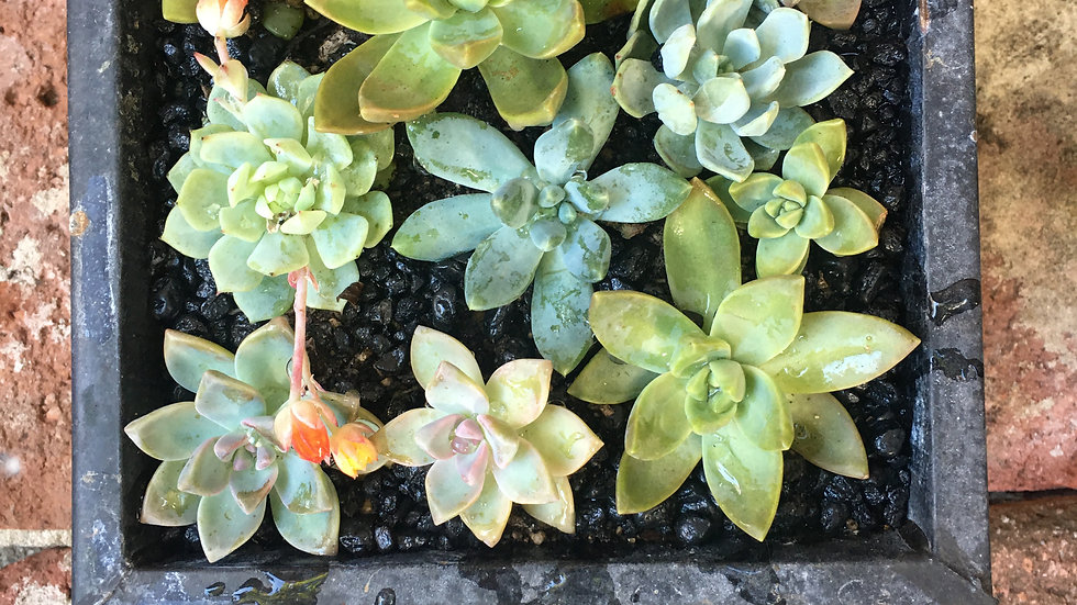 Succulents in a square tin planter