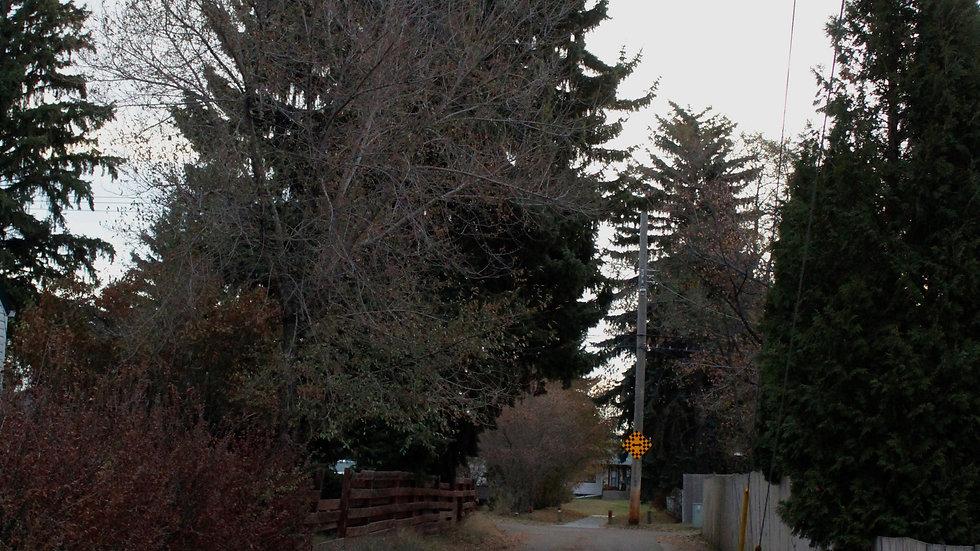 Alberta Alley