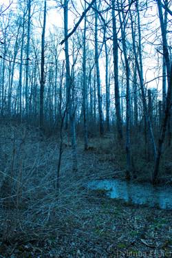 Nature12.jpg