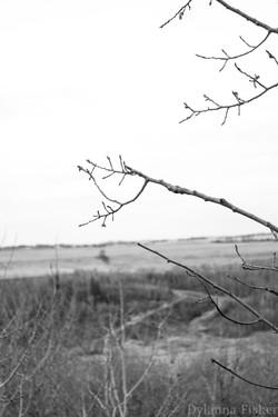 Nature13.jpg