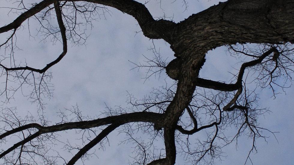 Veins of a Tree