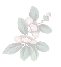 Flower-1-01.png