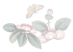 Flower-2-01.png