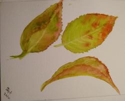 Leaves 2 by Fran