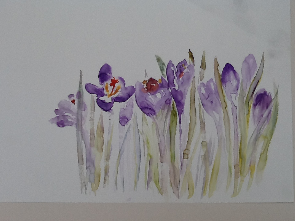 Sheila's Crocuses on shiny paper