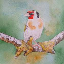 Bird 1 by Fran